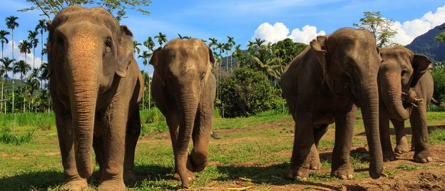 h9 Ethical Elephant Experience at Elephant Hills Luxury Tented Camp Khao Sok National Park Thailand - no Elephant Riding or Trekking