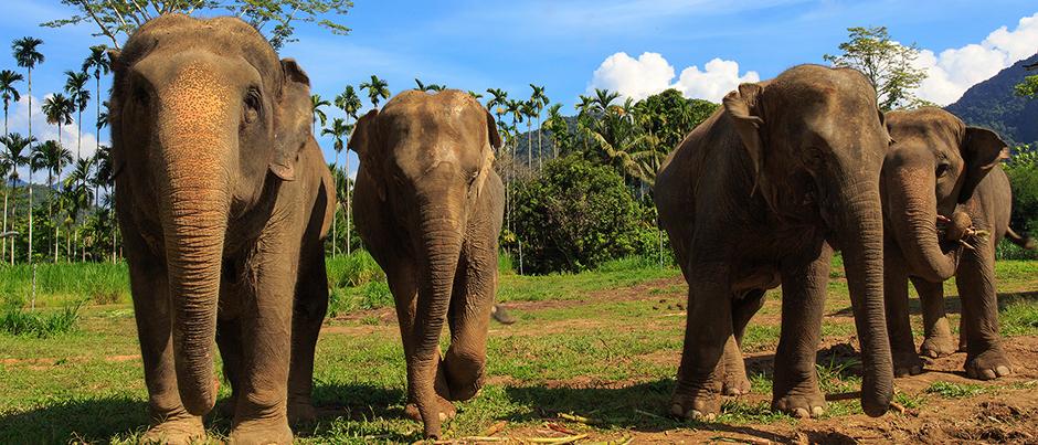 h9 Ethical Elephant Experience at Elephant Hills Luxury Tented Camp Khao Sok National Park Thailand - no Elephant Riding or Trekking