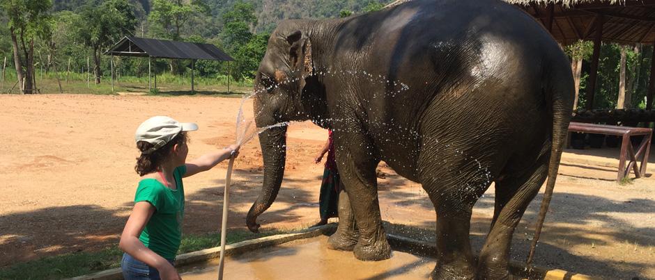 cropped-elephant
